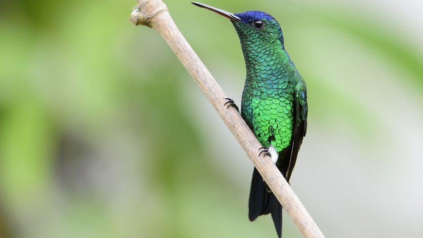 Tolima fue el quinto departamento con mayor número de aves avistadas en el Global Big Day