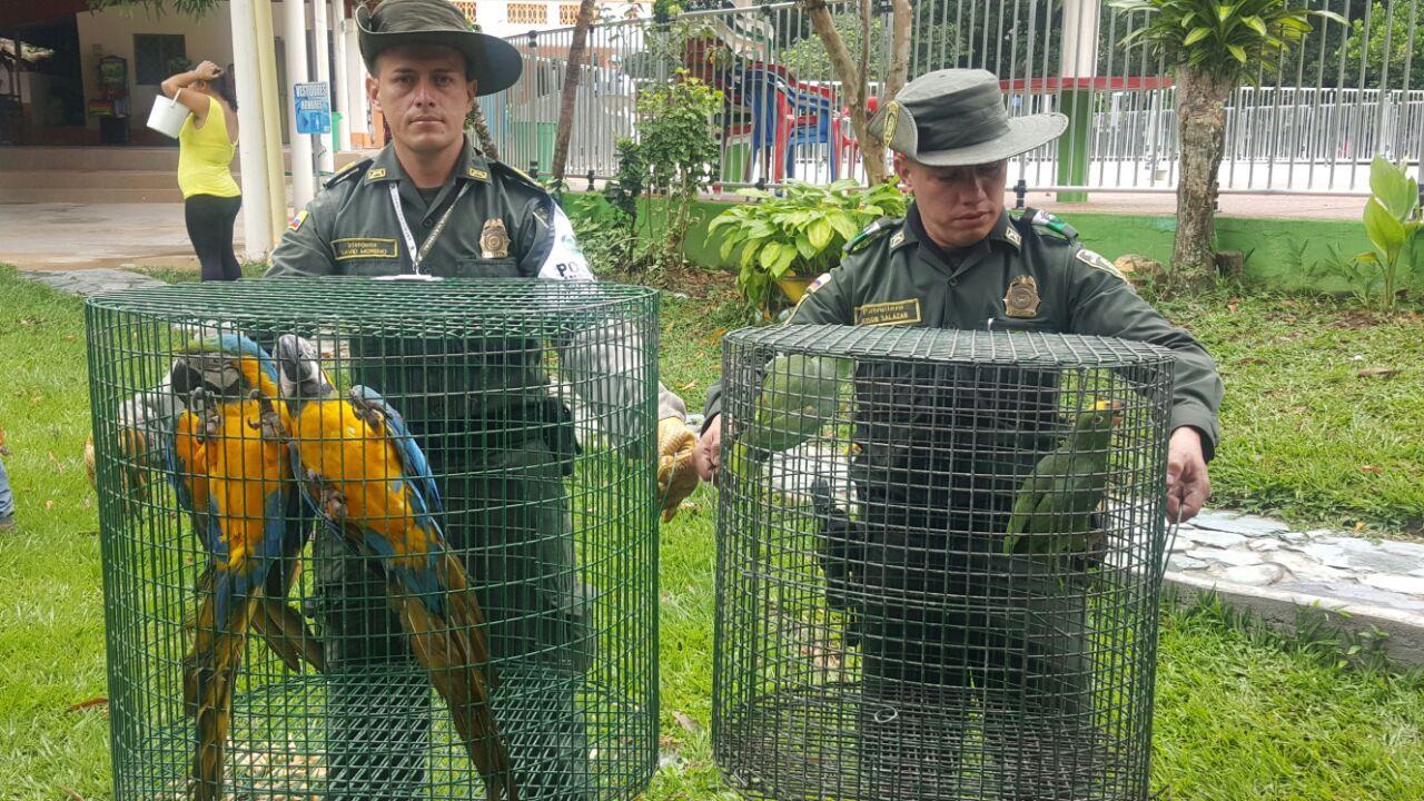 Incautaron animales silvestres en finca recreacional de Rovira
