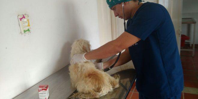 Capa ha atendido 10 casos por envenenamiento de caninos y felinos