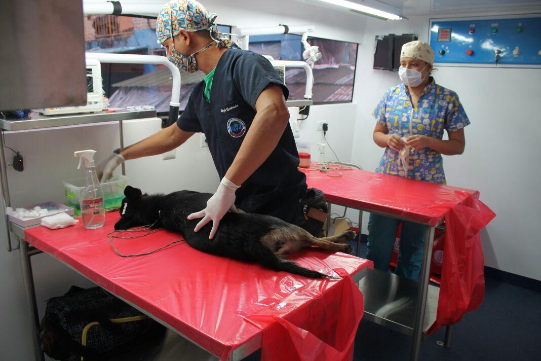 Hasta el 30 de noviembre podrá esterilizar a su mascota en la Universidad Cooperativa