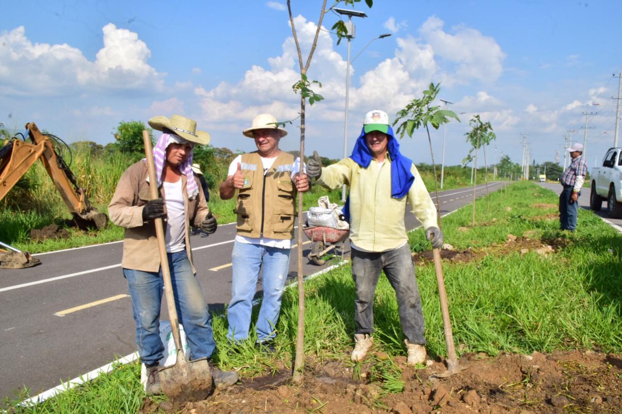Alcaldía y Cortolima iniciaron siembra de 990 árboles en la ciclorruta del Aeropuerto de Perales