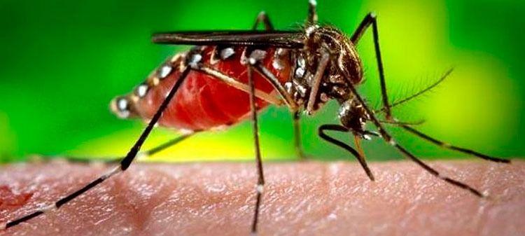 Tolima, tercer departamento con más casos de dengue reportados en el país