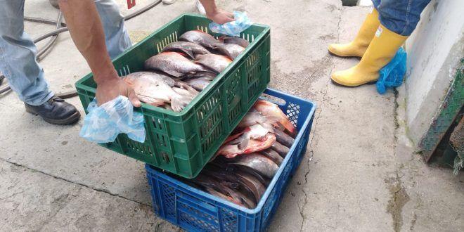 ¡Tenga cuidado! Incautan 58 kg de pescado en mal estado que iba a ser distribuido en Ibagué