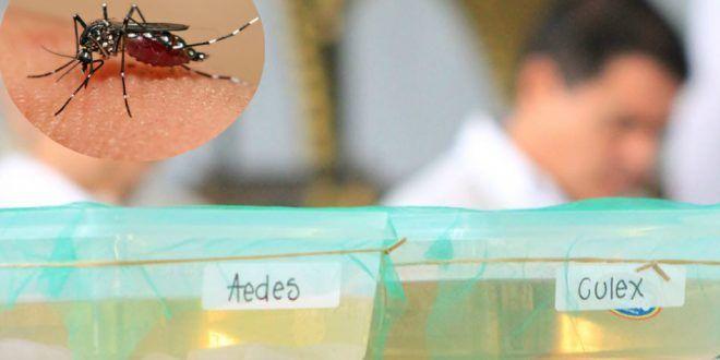 Ibagué en alerta por 335 casos probables de dengue