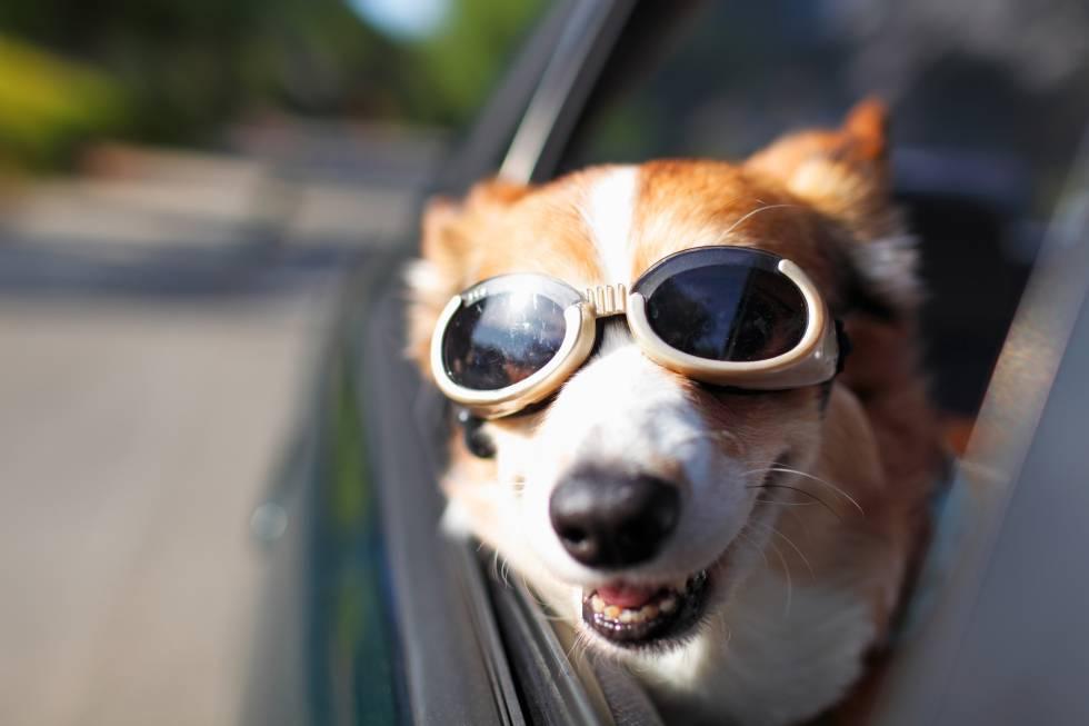 Evita el mareo de tu perro mientras viaja en carro