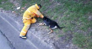 Soat servirá para responder por animales que sufran accidentes de tránsito