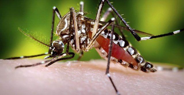 Dengue, Malaria y Fiebre Amarilla, los virus durante las vacaciones