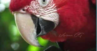 Campaña de Cortolima: En fiestas patronales respete la fauna silvestre