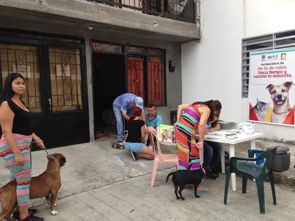 Esta semana habrá jornadas de vacunación para mascotas en 28 puntos de Ibagué