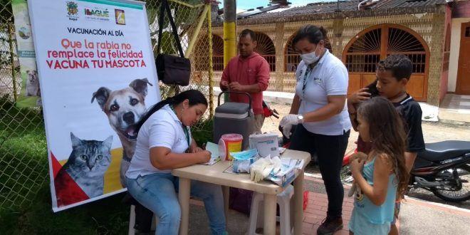 En total, 7.625 mascotas han sido vacunadas en lo corrido del año