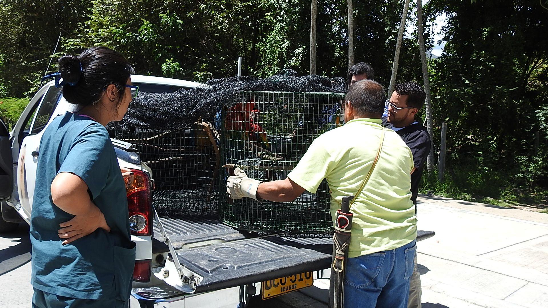 Cortolima reubicó a 16 animales de fauna silvestre en el zoológico de Cafam, en Melgar