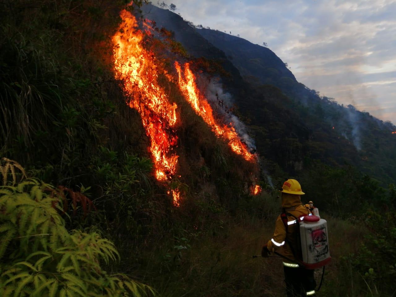 Ascienden a 1200 las hectáreas de bosques consumidas por incendios en agosto en el Tolima