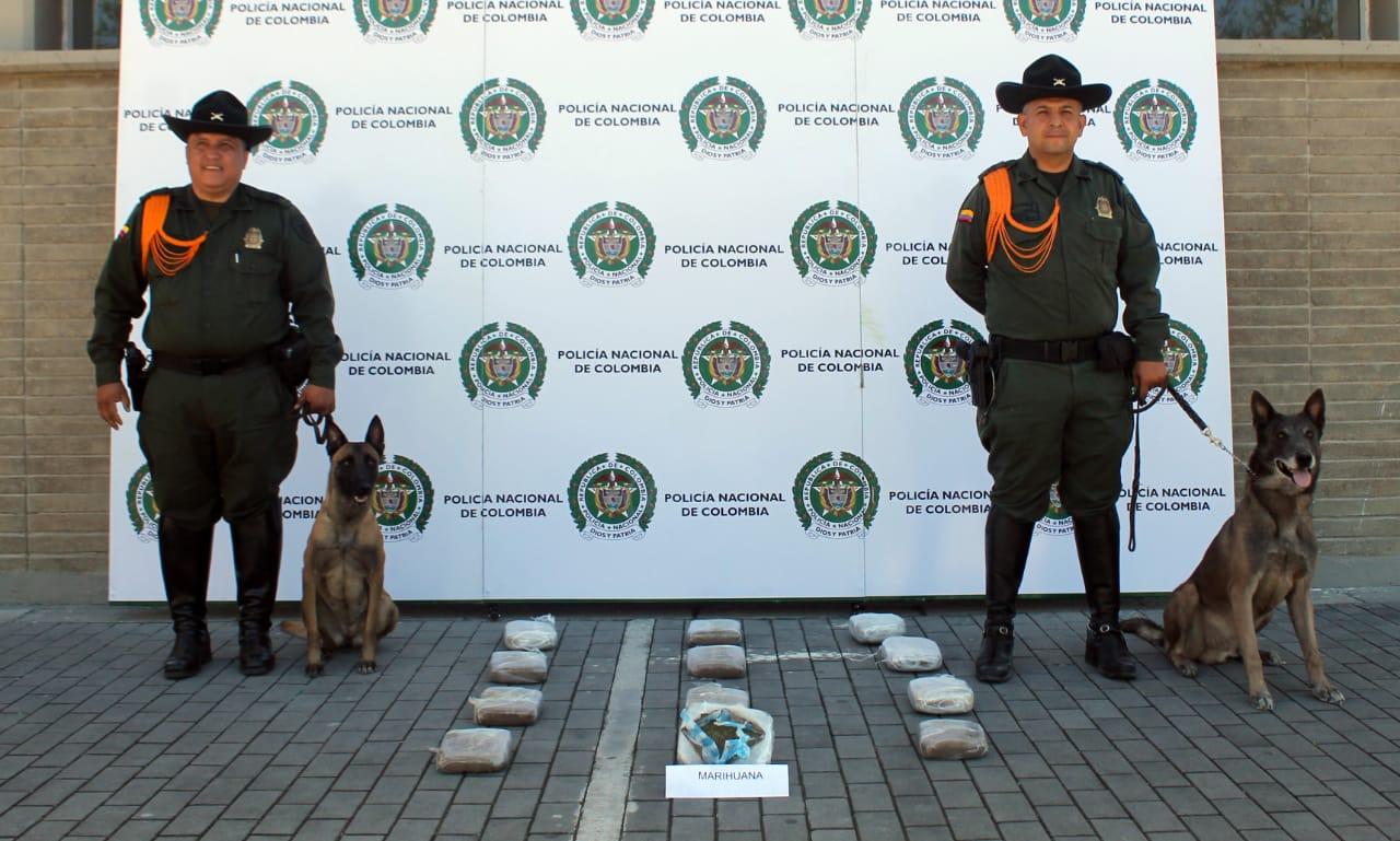 'Lany', la perra que detectó 40 mil dosis de alucinógeno en una encomienda