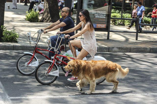 Ofrecen seguros para mascotas y bicicletas