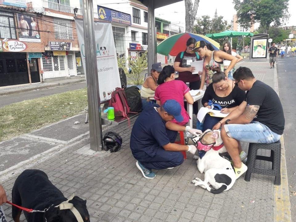 Conozca las fechas en que se realizarán jornadas de censo para perros de razas fuertes