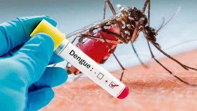A 10.466 aumenta el número de casos de dengue en el Tolima este año