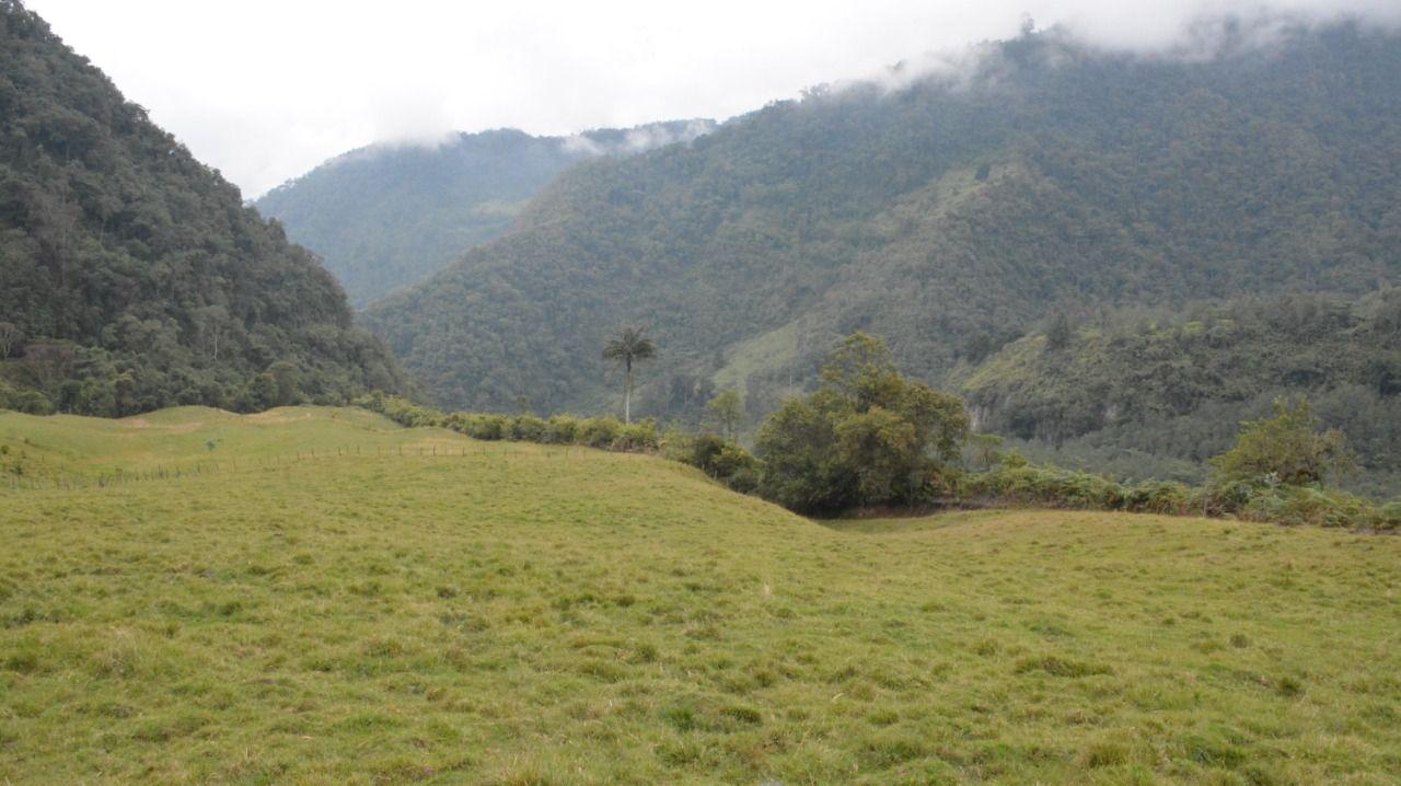 Cortolima restringe el ingreso a áreas protegidas