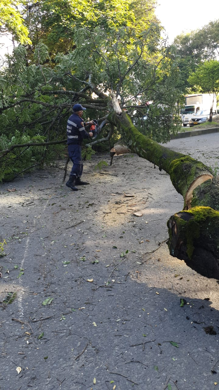 Organismos de socorro atendieron emergencias por caída de árboles