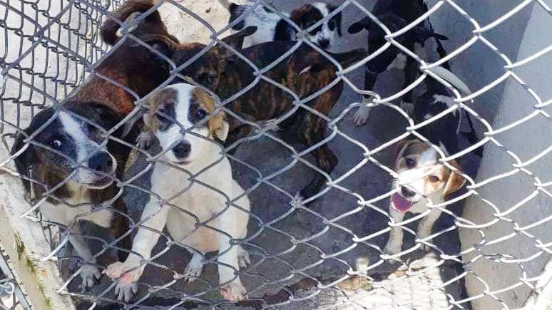 Incrementan casos de abandono y maltrato a mascotas en Ibagué
