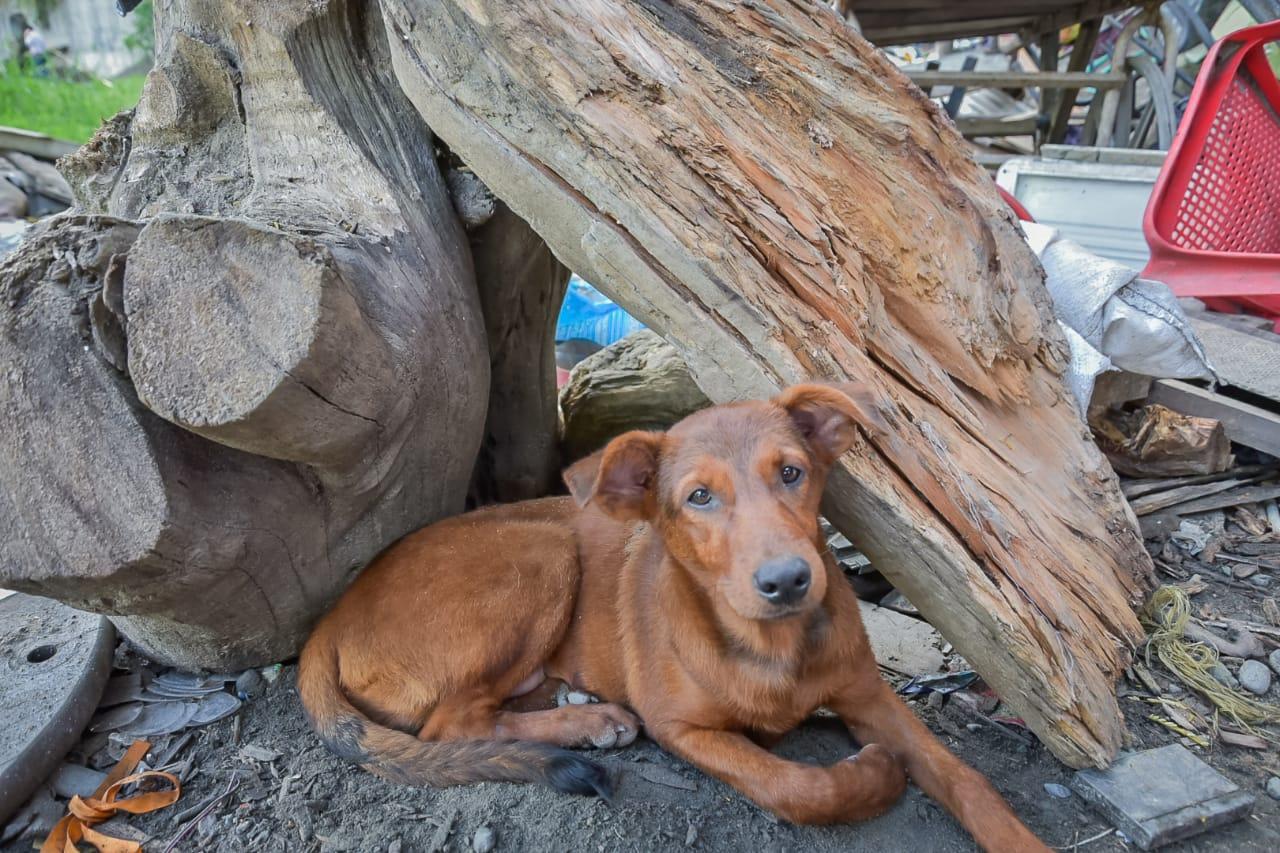 El Capa ha rescatado 159 mascotas abandonadas durante la cuarentena