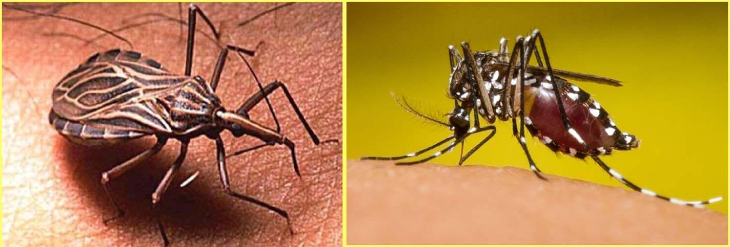 El dengue disminuye pero aumenta la leishmaniasis cutánea en el Tolima