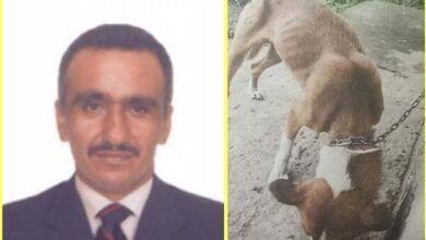 Photo of Cogió a un perro a machete porque se comió la comida de sus mascotas