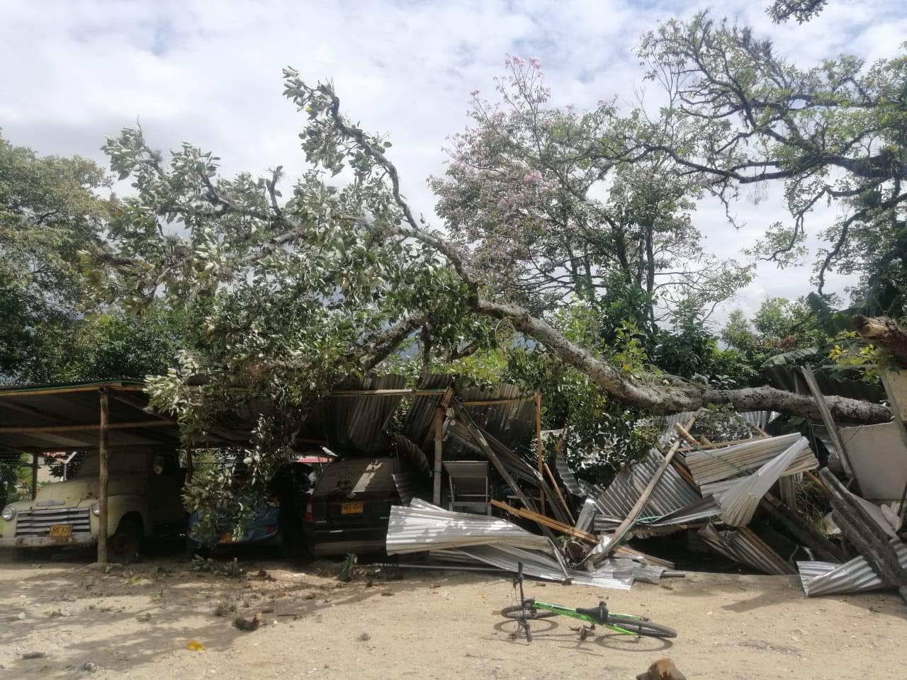 Árbol cayó sobre caseta de parqueadero del barrio Villa Café