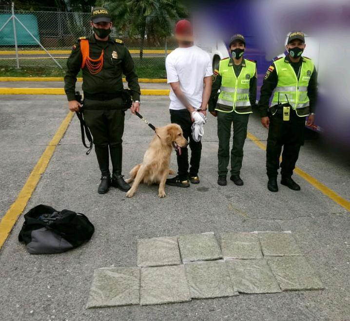 'Jefry' detectó a pasajero en la Terminal de Ibagué que viajaba con 4.568 dosis de marihuana.