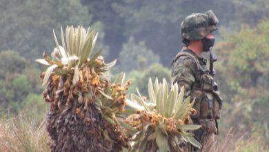 Photo of En Murillo sembraron 8.000 frailejones para la preservación del Volcán Nevado del Ruiz