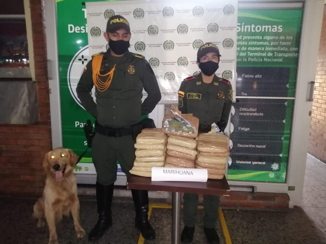 'Jeffry' olfateó 20 kilos de marihuana dentro de un bus en la Terminal de Transportes de Ibagué