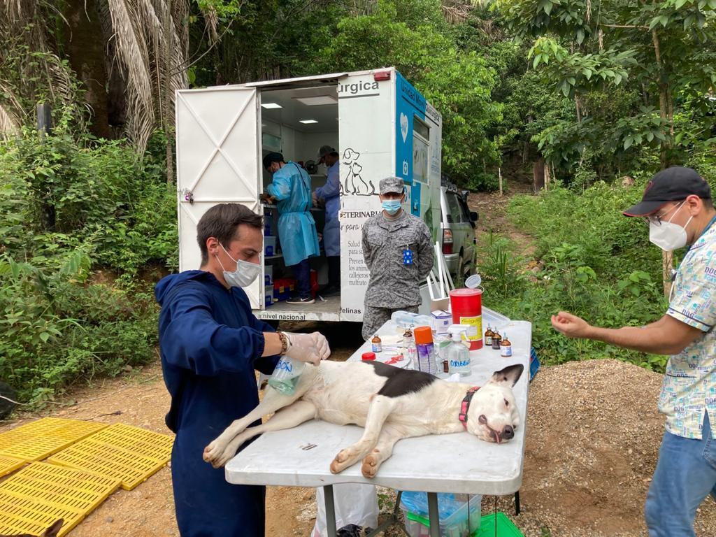 Jornada de esterilización en Melgar fue liderada por el Cacom 4
