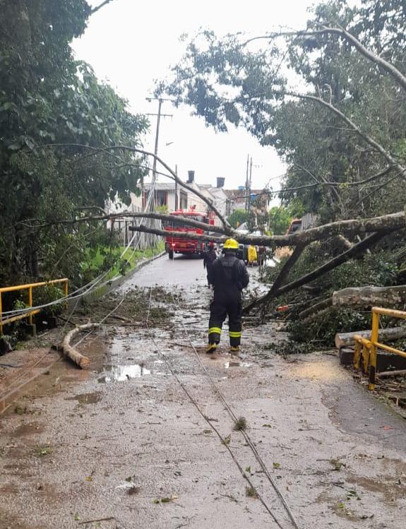 Las intensas precipitaciones causaron caída de árboles en el barrio Tierra Firme y la avenida Pedro Tafur